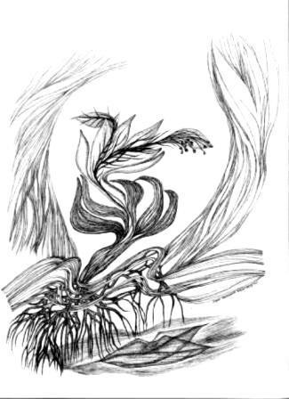 illustration du Djamel Amrani (Algerie) 2