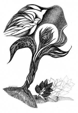 illustration Djamal Amrani(Algérie) 3