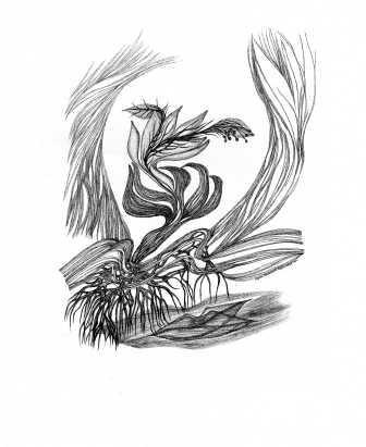 illustration Djamal Amrani (Algérie) 5