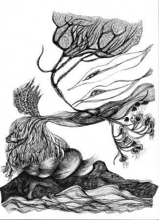 illustration du Djamal Amrani  1 (Algerie)