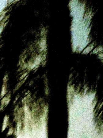 palmtree in the night